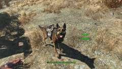 Чит на броню для собаки